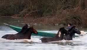 Дикие лошади на Скадарском озере