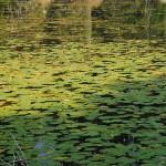 Пошченское озеро