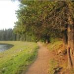 парк (4)