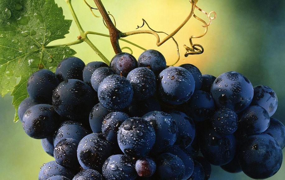 виноград 00003