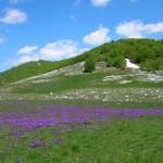 Priroda etno selo Montenegro