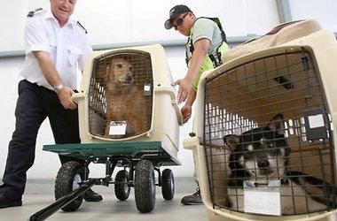 Перевоз животных