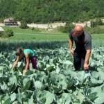 Раде с дочкой Ксенией на поле капусты