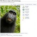 monkey 00006