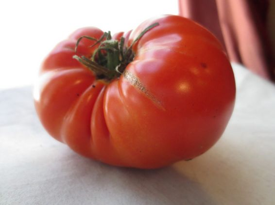 pomidor 00000